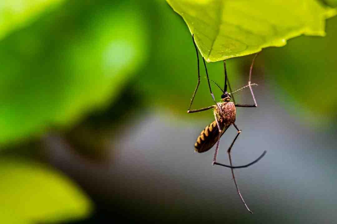 Comment mesurer une porte moustiquaire